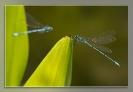 16 Libellen