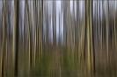 Bomen Bewogen Belvedere