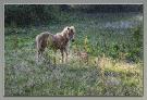 22 Paardje in pointillisme_1
