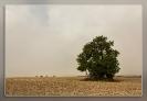 063 Wales Fog Tree_1