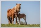 07 Paardjes in het Hoge land