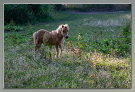 22 ponypaardje
