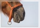 Paard_079