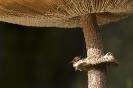 Wyldemerk